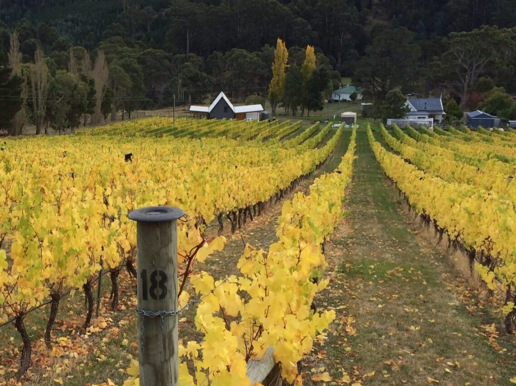 buy-tasmanian-wine-online-cool-climate-two-bud-spur-vineyard-huon-valley-winery